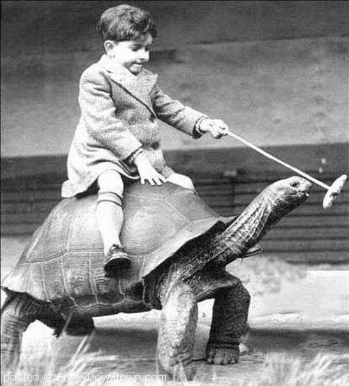 Schildpad vintage