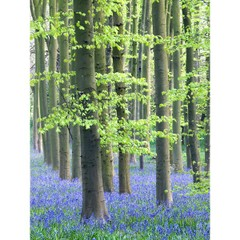 Bluebell_wood_2