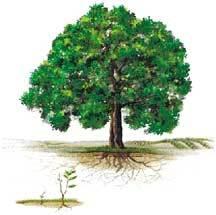 Tree11_29_04